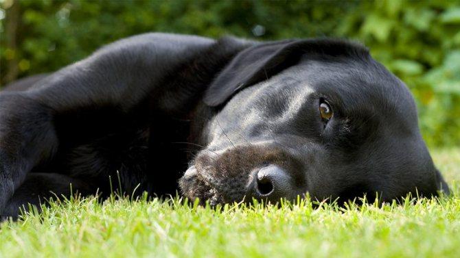Как понять, что собака болеет?