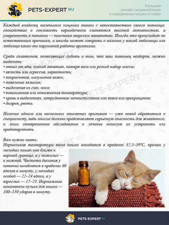 Как понять, что ваша кошка заболела