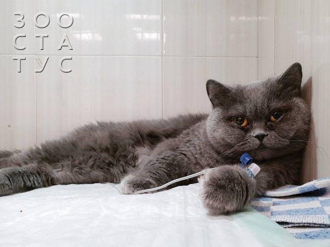 Как повысить аппетит у кошки с хпн