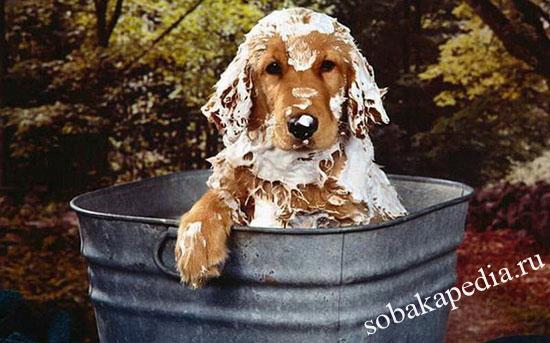 Как правильно купать собаку