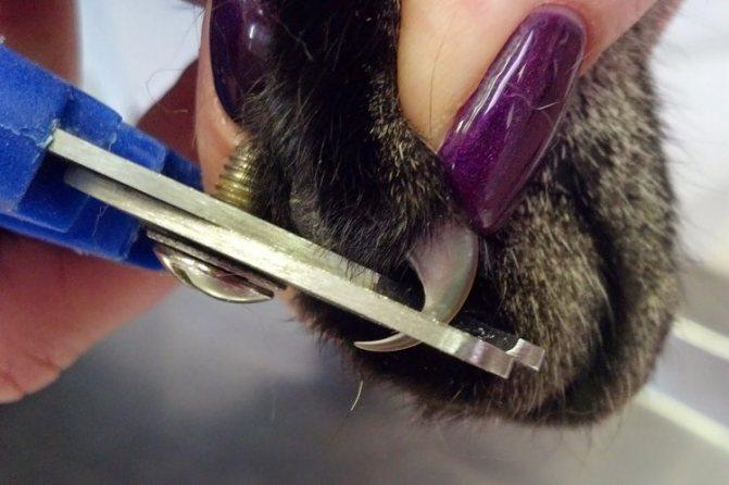 Как правильно подрезать когти