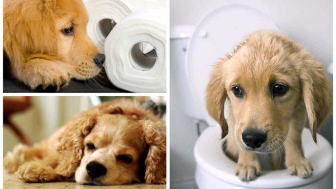 как правильно ставить клизму собаке