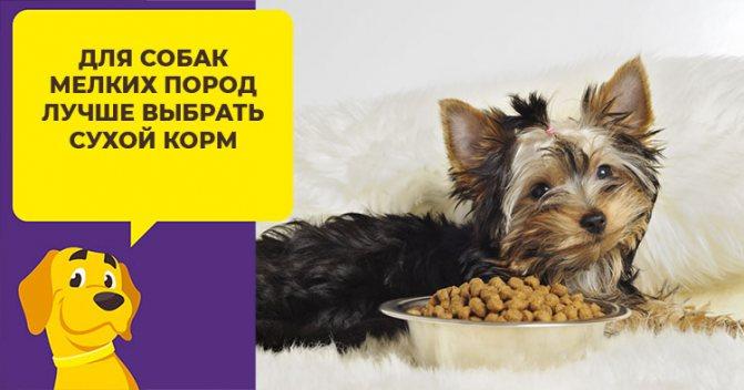 Как правильно выбрать корм для мелких пород собак