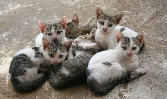 Как правильно выбрать котенка с улицы