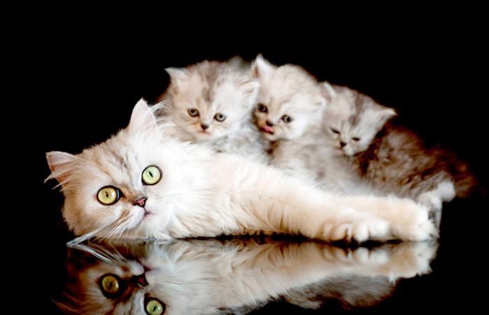 Как правильно выбрать котенка в питомнике