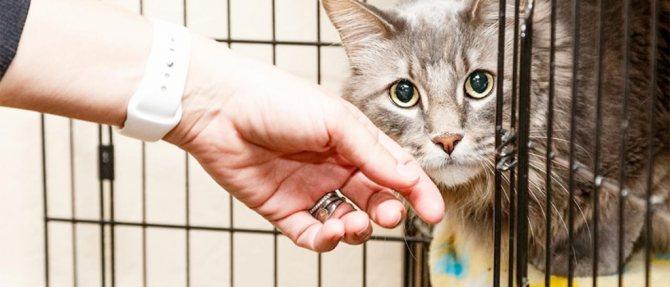 Как правильно выбрать котенка в приюте