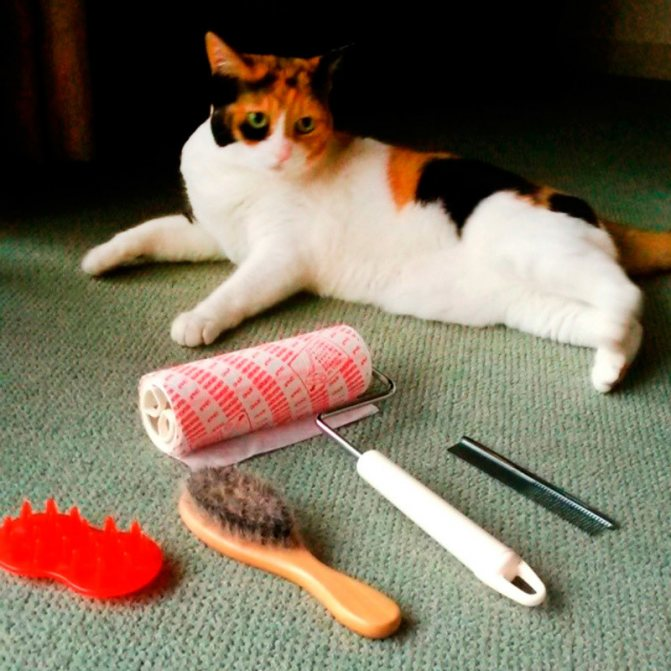 Как правильно вычесывать котов