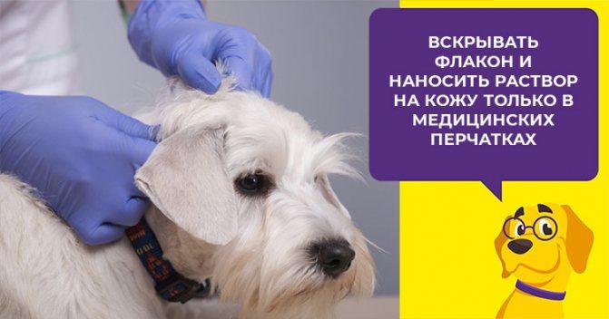 Как применять фунгин от лишая для собак: показания, дозировка, действие