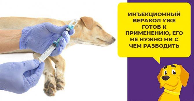 Как применять Веракол для собак: таблетки, капли, раствор для инъекций