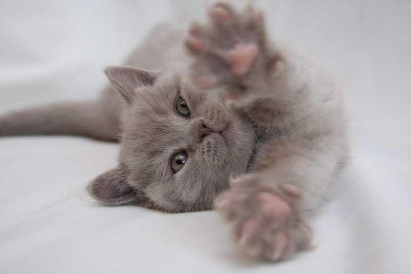 Как приручить кота к новому месту жительства