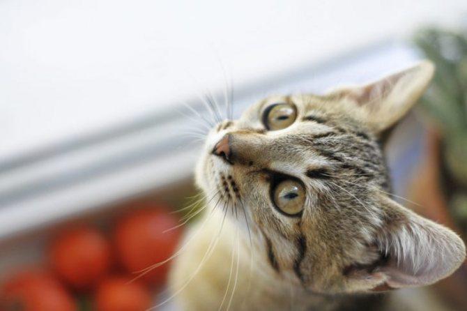 Как приучить к имени кошку
