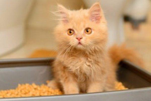 Как приучить кота к лотку: действенные методы