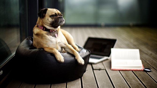 Как приучить собаку к команде Место?