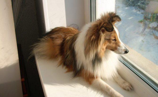 как приучить собаку не гадить, когда она одна дома
