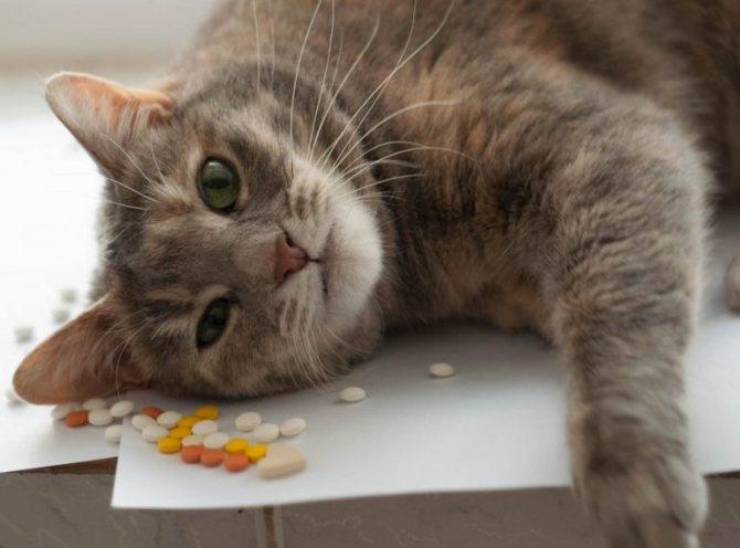 Как проглистогонить кошку перед прививками