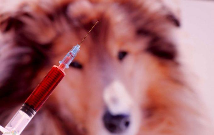 как проходит эвтаназия собак