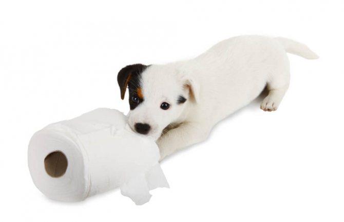 как проходит процесс приучения щенка ходить на пеленку