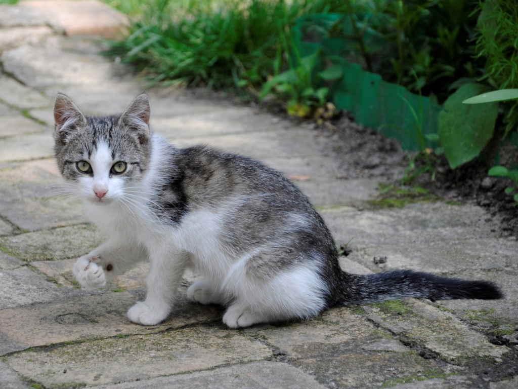 Как распознать у кошки инфаркт