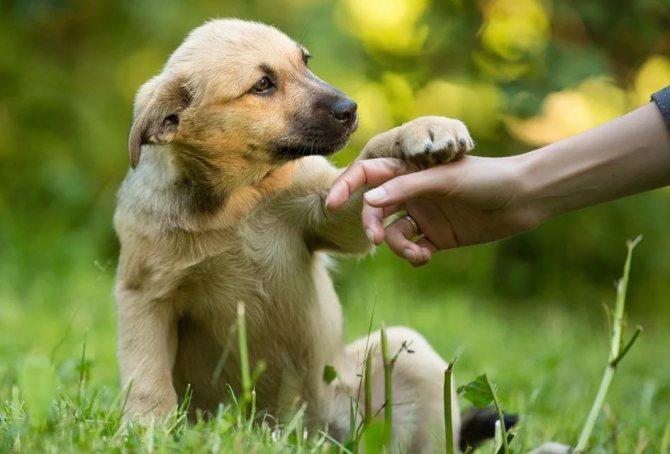 как самому дрессировать щенка