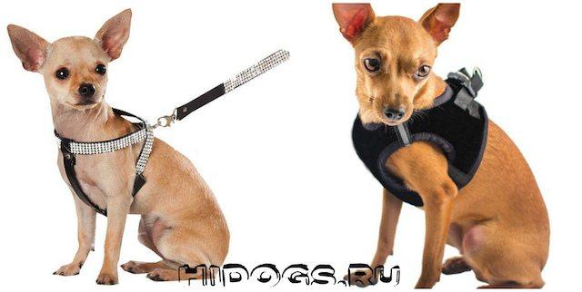 Как самостоятельно выбрать и сделать шлейку для собаки, ткань для шлейки, выкройки, как сделать замеры.