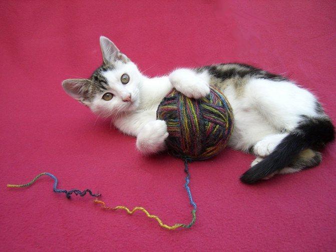 Как сделать игрушку для кота: своими руками в домашних условиях