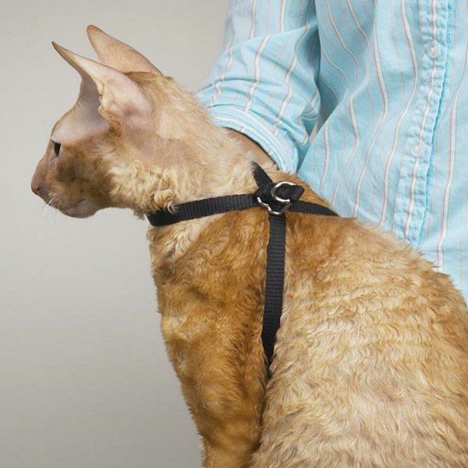 Как сделать ошейник для кота своими руками