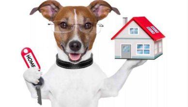 как снять квартиру с собакой