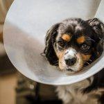 как снять швы у собаки