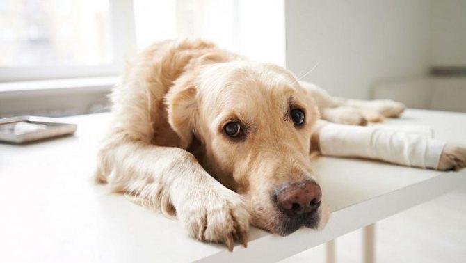 как снять швы у собаки в домашних условиях