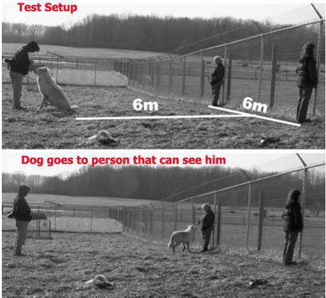 как собака видит человека