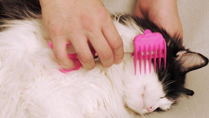 Как состричь колтуны у кошки