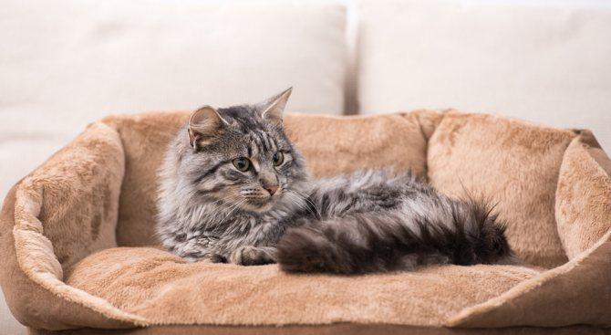 Как убрать колтуны у кошки колтунорезом