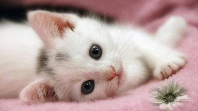 Как узнать значение сна про котят
