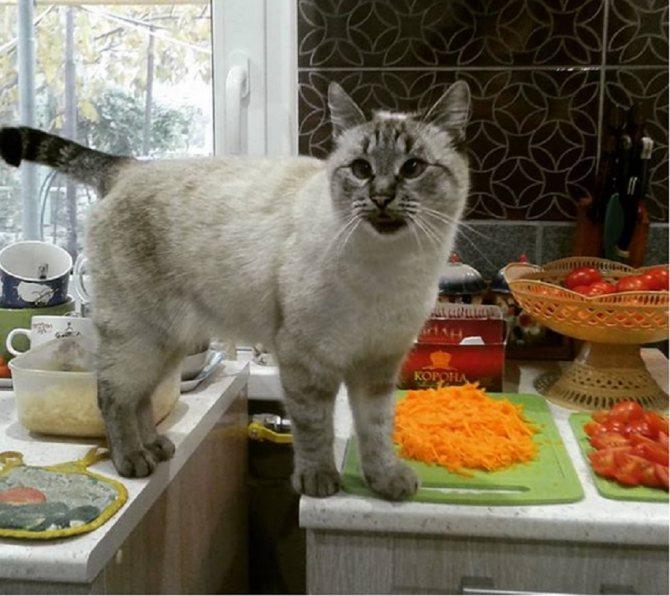 Как воспитывать кота