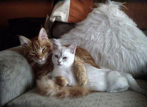 Как вязать кошек
