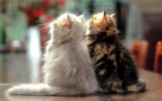 как вязать кошку с котом
