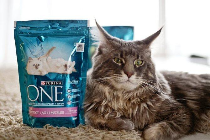 Как выбирать корм для домашних кошек