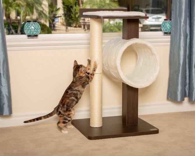 Как выбрать когтеточку для кошки
