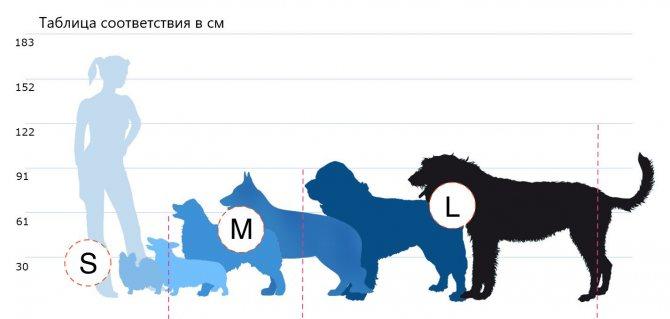 как выбрать размер лежака для собаки