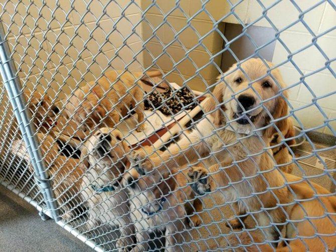 Как выбрать щенка в питомнике