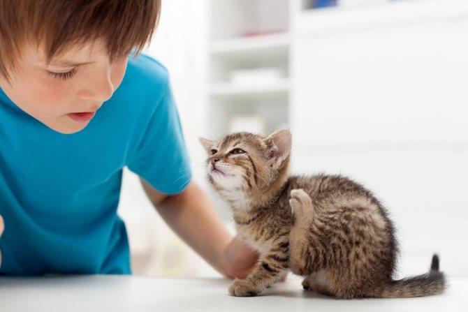 как вывести блох у новорожденных котят в домашних условиях