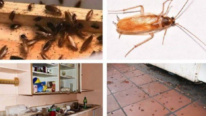 Как вывести тараканов из квартиры навсегда в домашних условиях