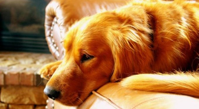 как выявить эндометрит у собак