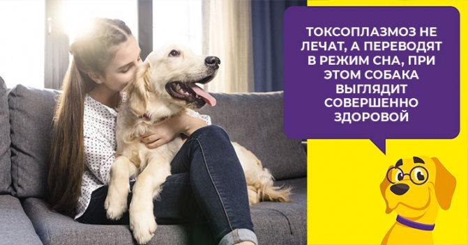 Как выявить и вылечить токсоплазмоз у собаки, меры профилактики