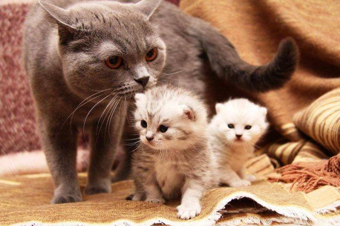 Как вызвать роды у кошки в домашних условиях