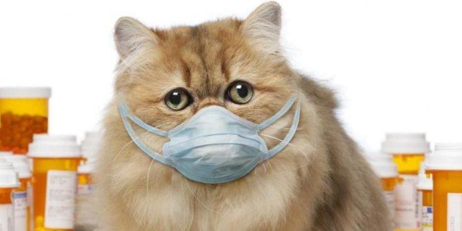 Как закапать капли в нос кошке Как закапать в нос кошке если у нее насморк