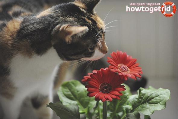Как защитить цветы от кошки - ZdavNews