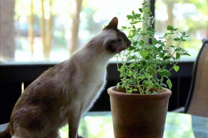 Как защитить комнатные растения от кошки? - советы и рекомендации для дома и огорода от NewsForever.ru