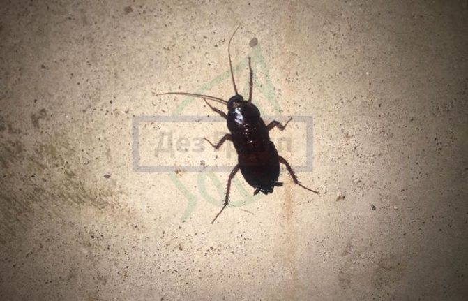 Как защитить квартиру от тараканов соседей