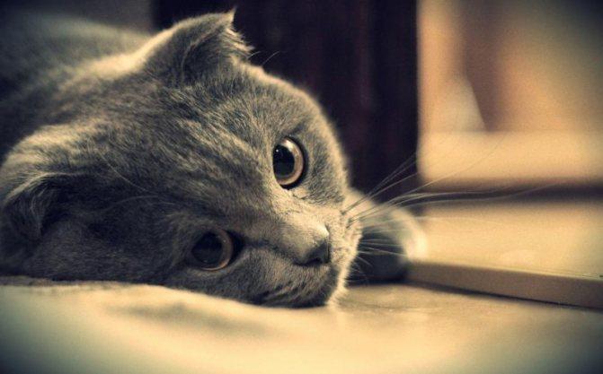 Как заставить кота или кошку пить больше воды
